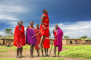 KEN9131AW Africa, Kenya, Narok County, Masai Mara. Masai men dancing at their homestead.