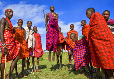 KEN9134AW Africa, Kenya, Narok County, Masai Mara. Masai men dancing at their homestead