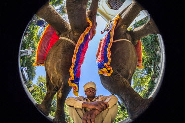 IND7641AW Asia, India, Rasthan, Ranthambore National Park. Low angle fisheye view of a indian man and elephants.