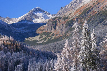 SLV1293AW Snow dusted mountains and pine forests of the High Tatras, Slovakia, Europe. Autumn (October)