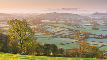 ENG11877AW Misty Glastonbury Tor and the Somerset Levels from the Mendip Hills, Somerset, England. Autumn (November)