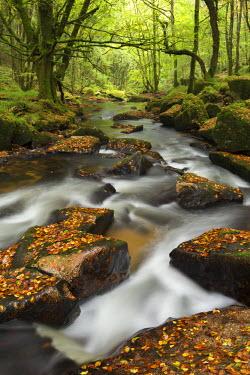 ENG11888AW River Fowey tumbling through rocks at Golitha Falls, Cornwall, England. Autumn (September)