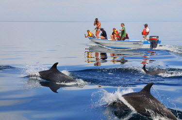 HMS0879474 Mexico, Baja California Sur State, Sea of Cortez, listed as World Heritage by UNESCO, Bottlenose dolphins (Tursiops)