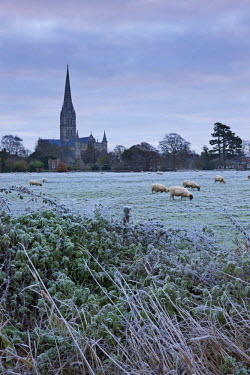 ENG12067AW Salisbury Cathedral on a frosty winter morning, from across the Water Meadows, Salisbury, Wiltshire, England. Winter