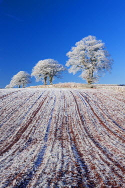 ENG12192AW Hoar frosted farmland and trees, Bow, Mid Devon, England. Winter