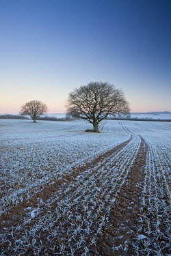 ENG12198AW Frost covered crops and trees in farmland, Chawleigh, Devon, England. Winter
