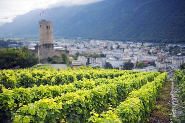 SWI7528 Europe, Switzerland, Swiss Alps, Valais, Martigny, vineyards and Martigny castle