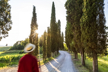 IT06652 Male walker on dirt track lined with cypress trees, Tuscany, Italy
