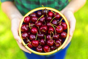 UK07613 Bowl of cherries, UK