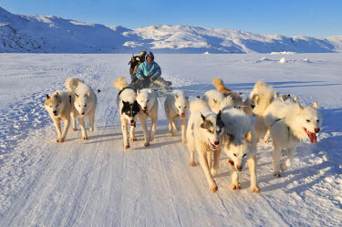 GRN1217AW Dogsled tour to Ilulissat, Greenland
