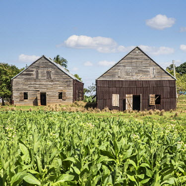 CB02311 Drying house on a Tobacco Plantation,  Pinar del Rio Province, Cuba
