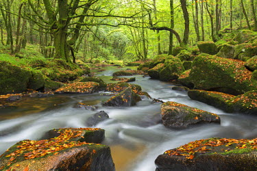ENG12315AW The River Fowey at Golitha Falls on Bodmin Moor, Cornwall, England. Autumn