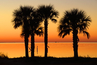 USA9585AW USA, Florida, Franklin County, Gulf of Mexico, Apalachicola, St. George Island , palm trees after sunset,
