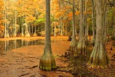 USA9662AW USA, Florida, Tallahassee, Panhandle, Tallahasse Museum, Cedar swamp,