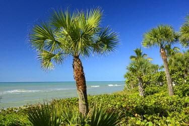 USA9673AW USA, Florida, Sarasota County, Casey Key, gulf coast with palm tree