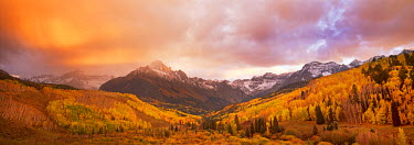 ARFRTE000085 Aspens and the Sneffels Range at Sunrise, San Juan National Forest, Colorado, USA