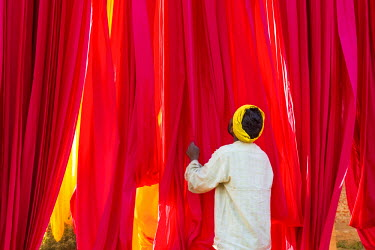 IN05660 Sari Factory, Textiles dried in the open air, The textiles are hung to dry on bamboo rods, the long bands of textiles are about 800 metre in length, nr Jaipur, Rajasthan, India