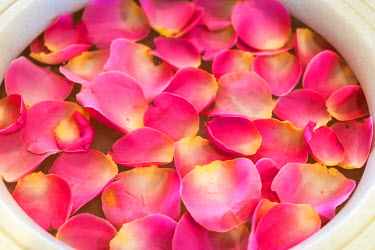 IN07041 Bowl of rose petals, Mumbai, India