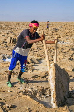 ETH2719 Ethiopia, Assale, Afar Region. A salt miner prises a large slab of salt from the ground which he will cut into regulation blocks called amole. The supersaturated brine just below the surface will quic...