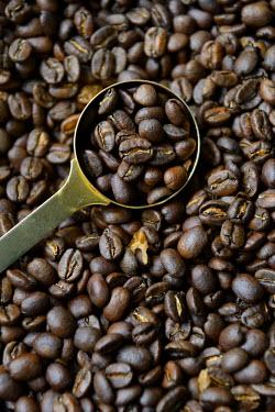 HMS1861618 Panama, Chiriqui province, Boquete, Coffee Plantation Finca Lerida, fresh roasted catuai coffee beans