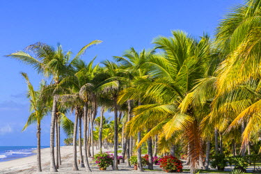 HMS1881083 Panama, Cocle province, Farallon, Playa Blanca lined with palm trees over the Pacific Ocean
