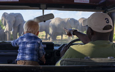 KEN9348 Kenya, Amboseli National Park. A young tourist is enthralled by a herd of elephant.