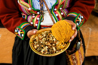 HMS0328612 Peru, Cuzco Province, Incas sacred valley, Chinchero, Quechua Indian weavers from the Awana Wasi community, ball of llama wool and the Inca's flower to dye