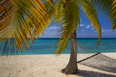 CA42BJN0011 Palm tree and hammock along Seven-Mile Beach, Grand Cayman, Cayman Islands, West Indies