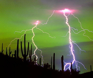 US03TWI0134 Dramatic cloud-to-ground lightning strikes with silhouetted saguaro cacti on ridge in Sonoran Desert. Eerie green glow produced by mercury vapor light reflected from clouds over the city behind the hi...