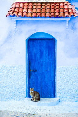 MOR2198AW Cat and a blue door, Chefchaouen, Morocco