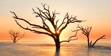 US34BJY0047 USA, North Carolina. Sunrise at Botany Bay Plantation Heritage Preserve