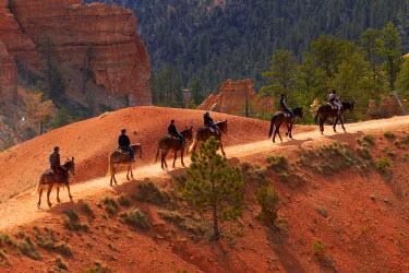 US45DWA0241 USA, Utah, Bryce Canyon National Park, horse trekkers near Queen's Garden Trail through hoodoos