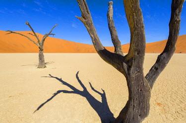 NAM6217AW Deadvlei, Namib desert, Namibia, Africa. Dead acacia pan.