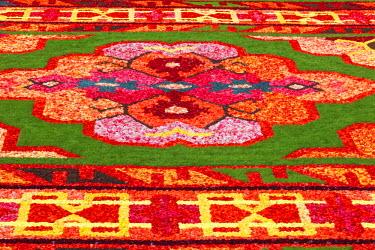 TPX49209 Belgium, Brussels, Grand Place, Flower Carpet Festival, Flower Pattern