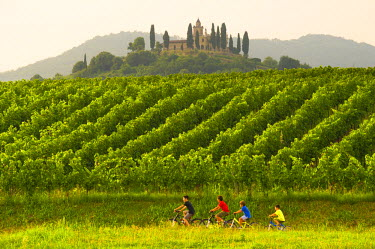 Gussago, Franciacorta, Lombardy, Italy. Vineyards.