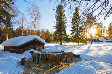 SWE4172 Arctic Circle, Lapland, Scandinavia, Sweden, Lulea, Gamelstad, open air museum, farmyard, Unesco World Heritage site