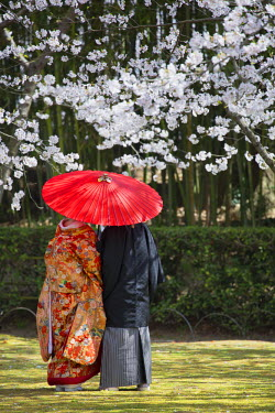 JAP0870AW Japanese couple wearing traditional clothing in Koraku-en Garden, Okayama, Okayama Prefecture, Japan
