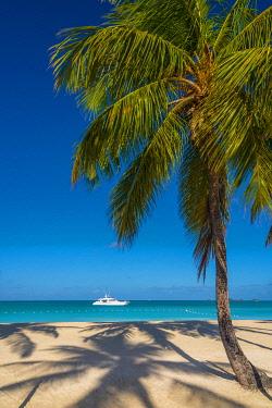 AB01139 Antigua, Jolly Bay Beach, Palm Trees casting shadows