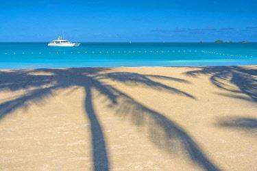 AB01141 Antigua, Jolly Bay Beach, Palm Trees casting shadows