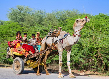 IND7806 India, Rajasthan.  Children of Rabari tribal nomads travel with their family�s belongings in a cart drawn by a painted camel. The Rabari are an indigenous tribal caste of nomadic shepherds who live in...