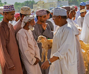 OMA2592 Oman, Ad Dakhiliyah Governorate, Nizwa. The lively, weekly livestock market at Nizwa where local farmers sell goats and cattle.