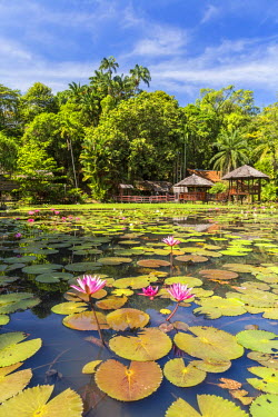 MY02266 Heritage Cultural Village & water lillies, Sabah State Museum, Kota Kinabalu, Sabah, Borneo, Malaysia