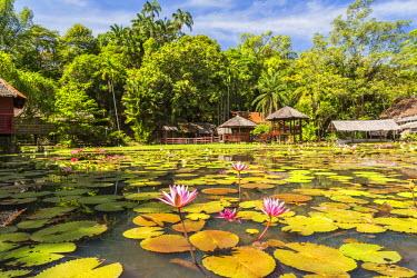 MY02267 Heritage Cultural Village & water lillies, Sabah State Museum, Kota Kinabalu, Sabah, Borneo, Malaysia