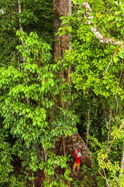 MY02248 Tropical rainforest, Sabah, Borneo, Malaysia