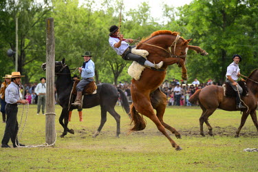 HMS1389897 Argentina, Buenos Aires Province, San Antonio de Areco, Tradition Day festival (Dia de Tradicion), gauchos demonstrate their ability with horses at a rodeo called Jineteada gaucha