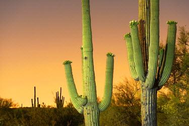 USA10103AW USA, Arizona, Phoenix, light pollution outside of Phoenix