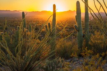 USA10108AW USA, Arizona, Tucson, Saguaro National Park at sunset