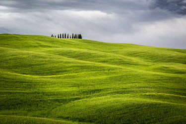 ITA4802AW Tuscany, Val d'Orcia, Italy. Cypress trees in green meadow field with clouds gathering
