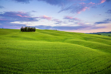 ITA4809AW Tuscany, Val d'Orcia, Italy. Cypress trees in green meadow field with clouds gathering meadow field at sunset