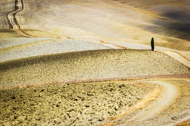 ITA4824AW Tuscany, Val d'Orcia, arid landscape with cypress trees